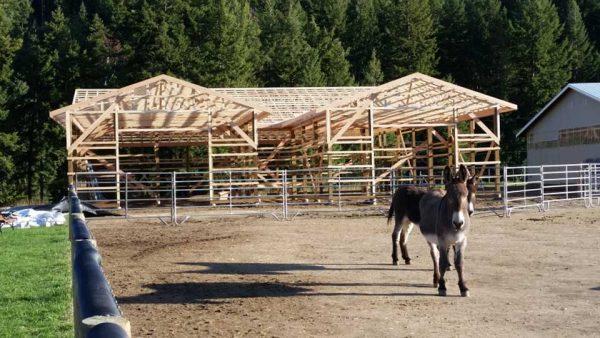 Turtle Valley Donkey Refuge | Arcana Building Company Ltd.